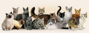 разные породы кошек
