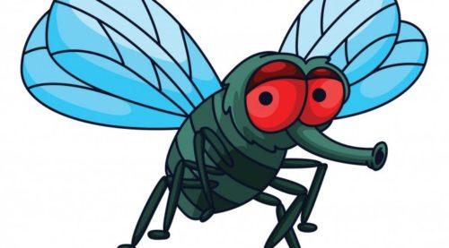 Откуда берется много мух
