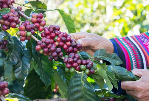 как делают кофе