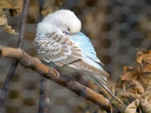 попугай спит