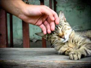 мурчащая кошка