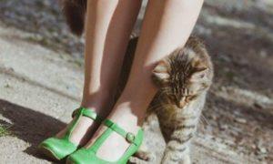 кошка трется о ноги