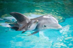 Дельфин – рыба или млекопитающее?