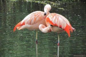 птицы на одной ноге