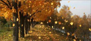 Для чего деревья сбрасывают листья?