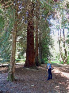 А меня покорили огромные деревья.