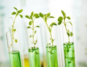 12. Генно-модифицированные растения, которые направлены на очищение воздуха
